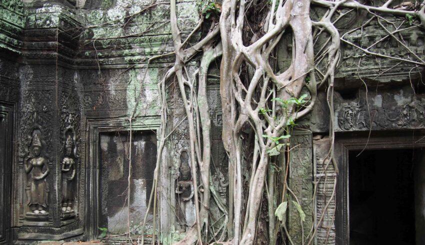 rădăcini